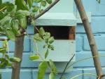 Birdbox 15 Feb
