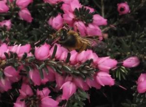 Curious bee