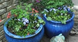 Freshly planted summer bedding pots