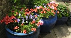 One week afer planting