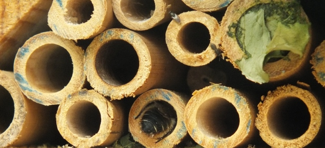 Bee entering tube