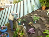 Planting the first climbing rose November 2014