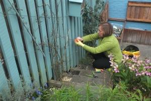 Training the jasmine